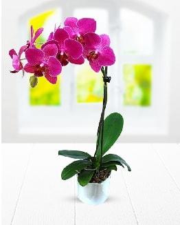 Tek dallı mor orkide  Karaman çiçekçiler