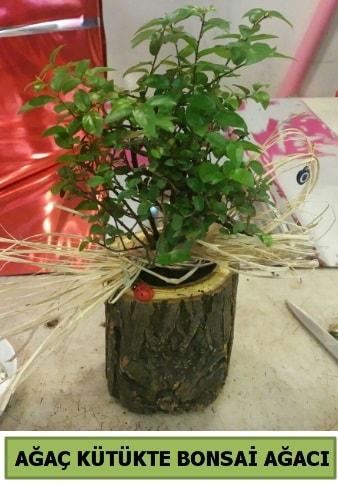 Doğal ağaç kütük içerisinde bonsai ağacı  Karaman hediye çiçek yolla