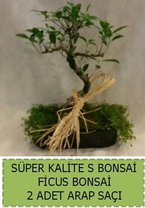 Ficus S Bonsai ve arap saçı  Karaman internetten çiçek satışı