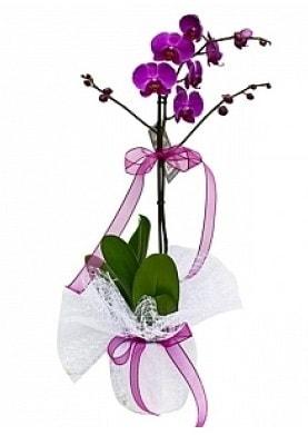 Tekli Mor Orkide  Karaman çiçekçi mağazası