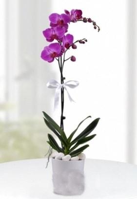 Tek dallı saksıda mor orkide çiçeği  Karaman 14 şubat sevgililer günü çiçek