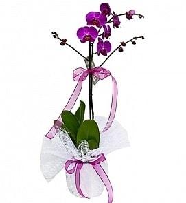 Tek dallı saksıda ithal mor orkide çiçeği  Karaman 14 şubat sevgililer günü çiçek