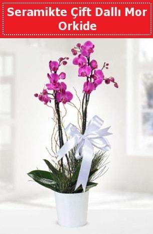 Seramikte Çift Dallı Mor Orkide  Karaman yurtiçi ve yurtdışı çiçek siparişi
