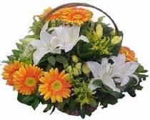 Karaman çiçek satışı  sepet modeli Gerbera kazablanka sepet